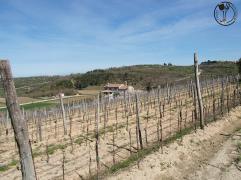 Sweet Wine and Walk (photo by SZ)